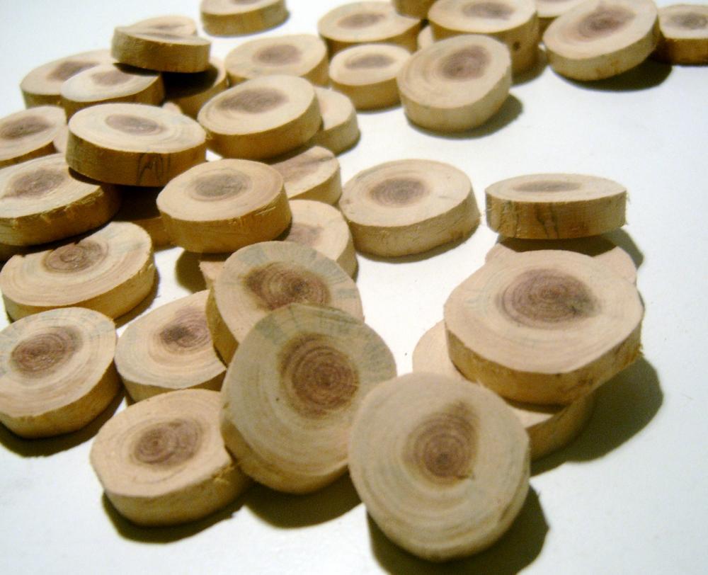 Cedar Wood Tree Branch Slices 150 piece Wholesale Lot